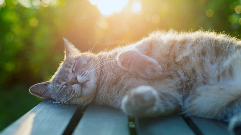 cat lying down on bench in sun (1)